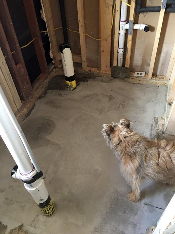 Effie inspecting new concrete floor