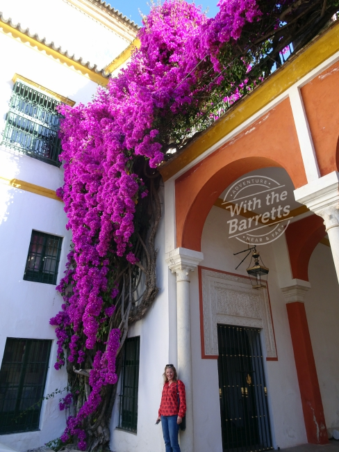 Debra and bougainvillea