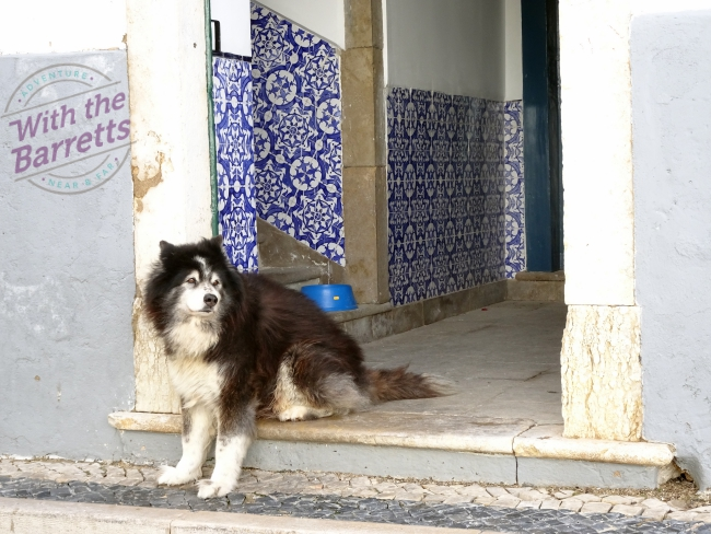 Dog in blue-tiled entryway