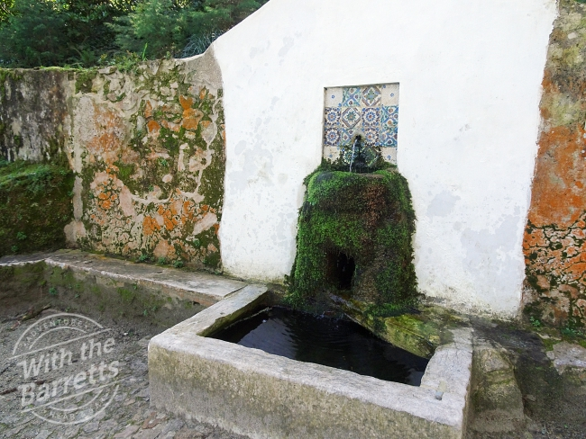 Tile accent on moss-covered drinking water fountain